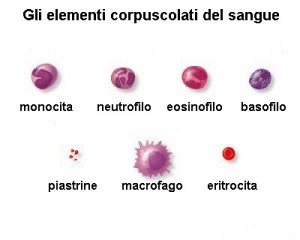 Elementi del sangue